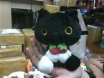 THÚ BÔNG KURO CAT